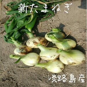 淡路島産 新玉ねぎ 5kg(ひょうご安心ブランド・特別栽培・栽培期間中化学肥料不使用)2020年3月収穫分