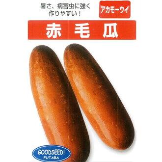 瓜子 (tsukeuri)