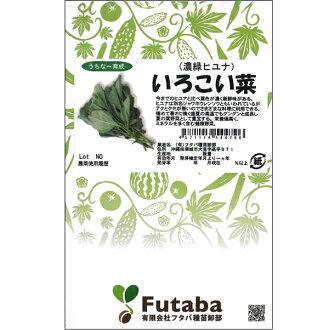 绿叶蔬菜 (暗绿色湖南) 物种
