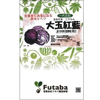 绿叶蔬菜 (大白菜) 物种