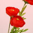 Ranunculus-r
