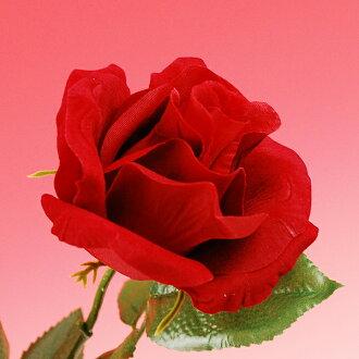 絲絨玫瑰玫瑰 (玫瑰)