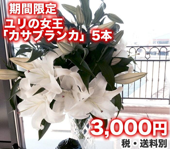 ゆり 『カサブランカ』5本 生花/切花/花束