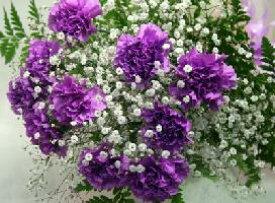 【母の日 ギフト】 紫カーネション『ムーンダスト・カスミ草』の花束 母の日 //早割