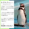 雙 Nishikawa 冷卻墊東麗多維資料集的邊緣做什麼馬特 Nishikawa 跪墊跪墊