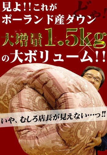 【送料無料】【ロイヤルゴールドラベル】ポーランド産ホワイトダウン93%大増量タイプ1.5kg国産羽毛布団/羽毛ふとん/うもうぶとんシングルロング