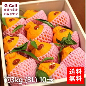 送料無料 愛知県蒲郡産 温室樹熟デコポン 10玉入 約3kg 3L お取り寄せ/フルーツ/果物/柑橘/贈答/ギフト/プレゼント