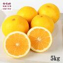有機肥料で育てた土佐小夏 5kg 約30〜45個入り  高知/土佐/柑橘/日向夏/ニューサマーオレンジ/贈答