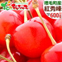 【予約】お中元 ギフト 北海道産 さくらんぼ 紅秀峰 600g (秀品/2L以上/300g×2/手詰め) 暑中見舞い サクランボ 最高級 果物 フルーツ …