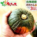 北海道産坊ちゃんかぼちゃ3玉入り(1玉300g)かぼちゃカボチャ南瓜坊ちゃん野菜秋野菜グルメ北海道送料込みハロウィンお取り寄せ