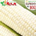 【出荷中】北海道 とうもろこし ピュアホワイト(白色) 10本入り北海道産 南幌町明るい農村ネットワーク 朝採り 生食 甘い 美味しい ス…