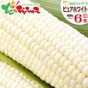 【出荷中】北海道 とうもろこし ピュアホワイト(白色) 6本入り北海道産 南幌町明るい農村ネットワーク 朝採り 生食 甘…