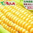 【出荷中】北海道産 とうもろこし 味来 (10本) 黄 生 甘い スイートコーン フルーツコーン トウモロコシ とうきび ト…