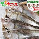 【出荷開始】北海道産 生ハタハタ 1箱 3kg (メス/子持ち/約15尾〜20尾入り/冷蔵品) 生 冬の味覚 はたはた ハタハタ 鰰…