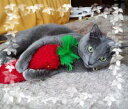 【猫没頭】キックキャロット 1本 猫のおもちゃ 猫 マタタビ入り ケリケリ 夢中 大暴れ またたび たっぷり おもちゃ ス…