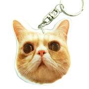 キーホルダー猫61エキゾチックショートヘアー【ねこネコプリントキーリング雑貨グッズかわいい通販】【動物祭り】