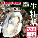 【マルえもん Lサイズ20個】北海道厚岸産本養殖牡蠣生食用