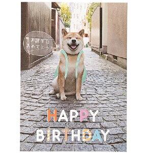 柴犬まる 誕生日カード ポップアップカード (道) B32067 学研ステイフル