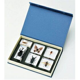 プラスチック封入昆虫標本 6種セット(カブトムシ・クワガタ・チョウ・トンボ・バッタ・ハチ)