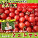 ミニトマト3kg箱入り(バラ詰め)Mサイズの場合約150個入り1個あたり約22円【送料無料】 10P31Aug14