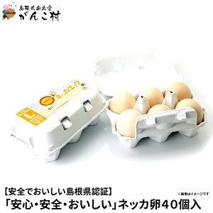 卵「安心・安全・おいしい」ネッカ卵40個入(玉子Lサイズ・紙製卵パック入/10個×4)卵かけご飯に!国産/生卵【送料無料】【楽ギフ_のし】【楽ギフ_のし宛書】