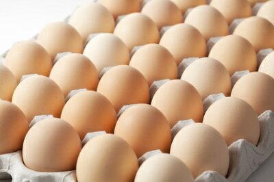 卵ケース入り斜め撮り