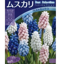秋植え球根 ベストセレクション ムスカリ「ベストミックス」4球入