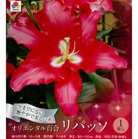 【30%off!!】秋植え球根〜春植え オリエンタルリリー【リパッソ】1球入り