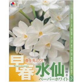 秋植え球根水仙【早春房咲き】3球入ペーパーホワイト