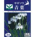 春植え球根 サギソウ「青葉」3球入り鷺草 (さぎ草、サギ草)