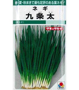 タキイ ネギ 九条太 【15ml】 野菜種 葉菜 ねぎ