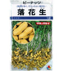 タキイ 落花生(半立性) 【1dl】 夏野菜 野菜種 実菜 ピーナッツ