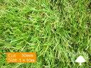 【送料無料】人工芝高密度 リアル人工芝 ロール 1×10m【防炎検査済み】最安値挑戦中!芝用ピンのプレゼント付き