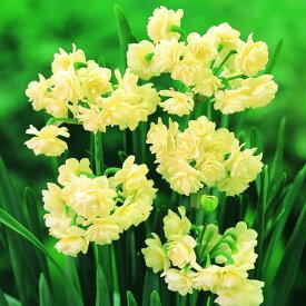 水仙 球根 エルリッチャー 2球セット 秋植え 球根 栽培 花壇 趣味 園芸 ガーデニング 庭 花 植物
