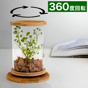 小型テラリウム 鉢 ガラス容器 小さな苗 ポット 苔テラリウム 鉢 おしゃれ 小さい観葉植物 エアープランツや苔用 エアプランツ用 ミニ水槽 テラリウム ハイドロカルチャーで観葉植物を植え