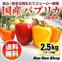 【送料無料】国産パプリカ 赤・黄・オレンジ アラカルトセット2.5kg A品(13〜15個・個包装・化粧箱入)【産直】【野菜】【安全】
