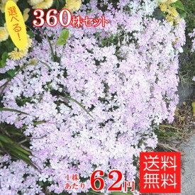 シバザクラ(芝桜) たっぷり360株セット苗【品種が選べる!】【送料無料】 (60株×6口選択)