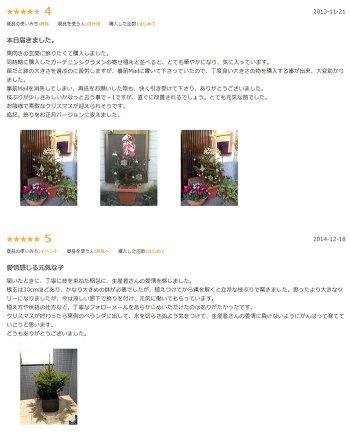 【送料無料】「もみの木クリスマスツリー購入」今年こそ!本物モミの木の生ツリー!【高さ:100cm】届いて・植えて・すぐ綺麗!鉢植えではないです。トウヒではない本物!ウラジロモミ【代引き不可】【メッセージカード不可】【離島・沖縄配送不可】