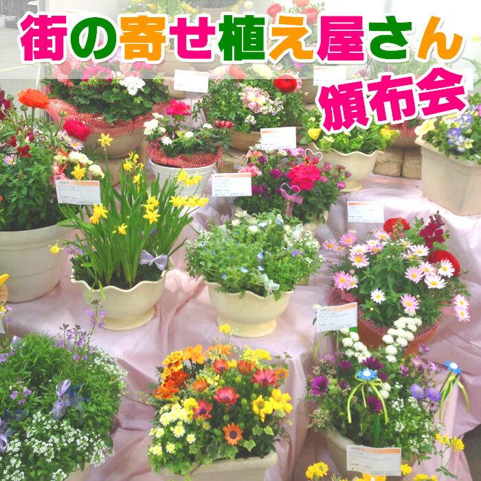 【初回たったの5円にてご提供キャンペーン】季節のお花 寄せ植え 定期購入 (毎月15日前後にお届け)送料無料 花 春 ギフト プレゼント 鉢 定期