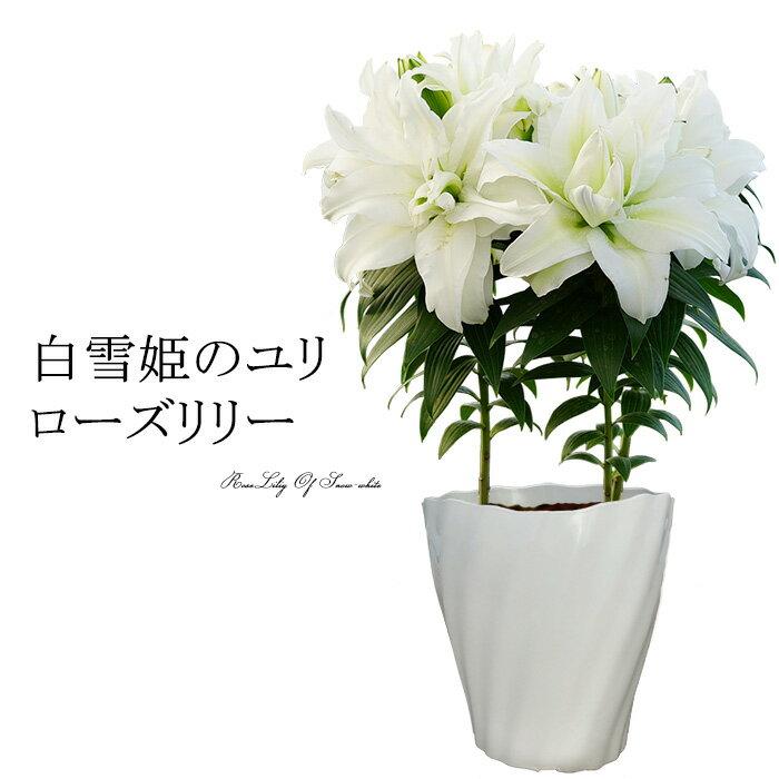母の日 ギフト 送料無料「白雪姫のユリ ローズリリー」純白の大きな鉢植え 後払い可能 メッセージカード付 プレゼント 早割り