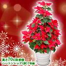 【送料無料】本物のポインセチアで仕立てたクリスマスツリー【寒さに弱いお花のため、寒冷地へのお届けはご遠慮ください】【RCP】