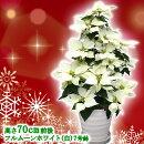 【送料無料】お歳暮やギフトにも!本物のポインセチアで仕立てたクリスマスツリー背丈70センチ7号鉢植えフルムーンホワイト白いポインセチア大鉢プリンセチア【育て方(管理マニュアル)クリスマスカード付・ラッピングなし】