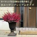 【送料無料】カルーナ ブルガリス プレミアムサイズ 玄関向きの大鉢仕立て ヨーロッパの玄関先を我が家に!鉢植え 多…