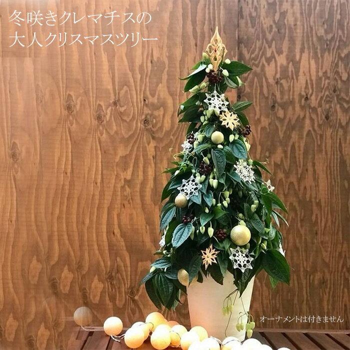【送料無料】【即納品】冬咲きクレマチス(常緑) アンスンエンシスのクリスマスツリー オトナのクリスマスツリーでセンス良く飾れます!【メッセージカード対応可能】