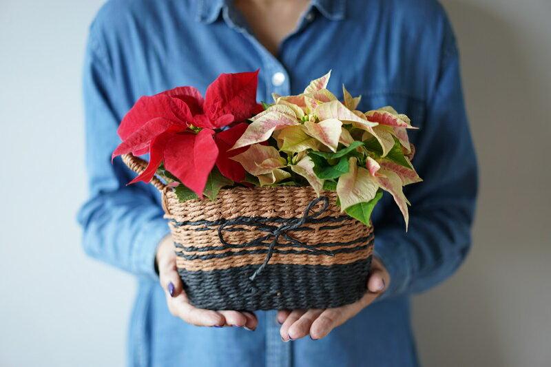 【送料無料】【数量限定】気軽に贈るポインセチア クリスマス ギフトバッグ仕様 カゴ入り娘 【代引き不可】【メッセージカード不可】