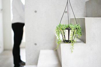 吊るすのにオススメ!観葉植物グリーンネックレスティアドロップス5号送料無料ハンギングスタイルメッセージカード付き