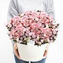 【送料無料】ツツジの鉢植えレジーナ9号レジナ早咲きつつじが豪華に咲き誇る!【他商品との同梱不可】