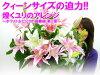 【結婚祝いプレゼントランキング花】クィーンサイズの誘惑!煌くユリのアレンジ〜ホワイト&ピンクの協奏曲第2章〜【お祝い花】【メッセージカード無料】【突破1205】
