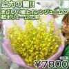 迫力の蘭!!まぶしい極上オンシジュームの超ボリューム花束7800円!!