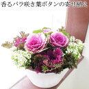 ちょっと高級♪かなり上質!香るバラ咲きハボタンの寄せ植えプラチナケールか輝く上質なバラ咲きは日陰でもずっと綺麗!